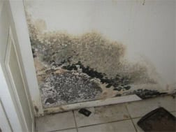 Mold Testing at Healthy Home Environmental Services