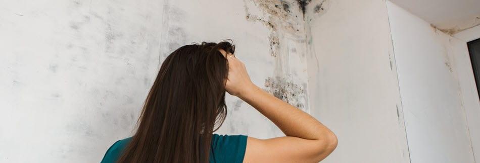 mold inspection testing orlando